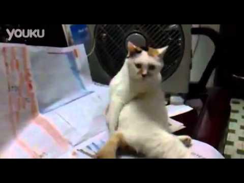 Cat Butt Scratch Best Reaction