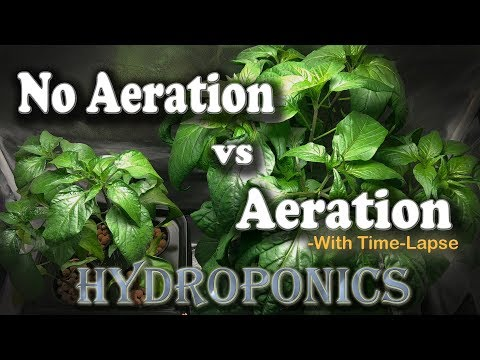Aeration vs No Aeration - Hydroponic Peppers w/Time Lapse (B