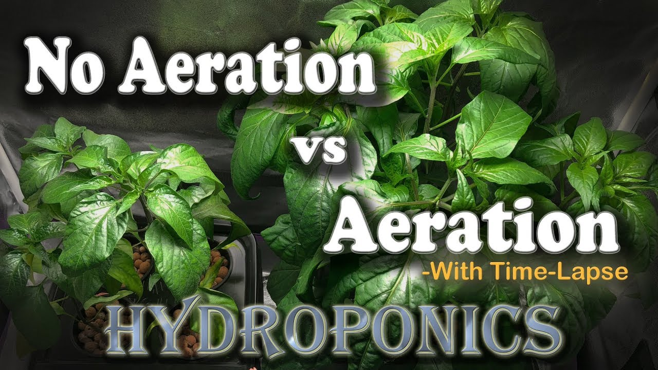 "Aeration vs No Aeration - Hydroponic Peppers w/Time Lapse (Brinno) ""Semi-DWC vs Kratky"""