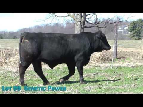 Lot 90  Genetic Power