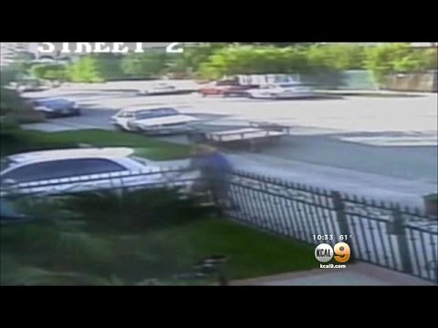 Caught On Camera: Venice Man Accused Of Allowing His Dogs To Kill Neighbor's Cat