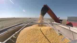 Fetters Farms Auction - Harvest Video. Sullivan Auctioneers, LLC