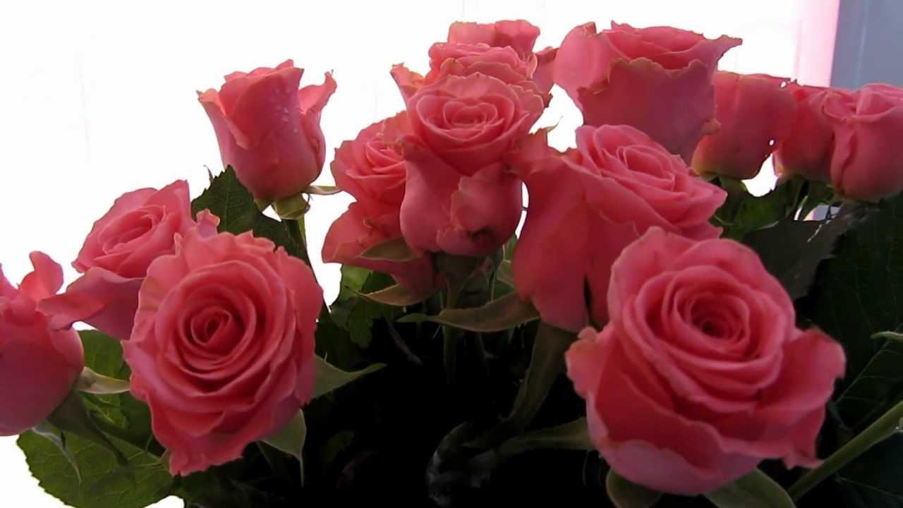 Купить почвопокровные розы в интернет магазине садового центра элит роза. Только лучшие сорта, фото, цены, описание каждого растения. Удобные способы доставки.