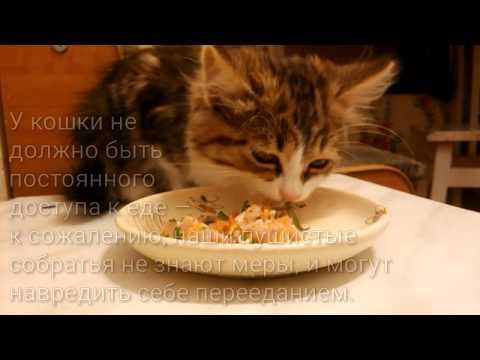 Как варить курицу котенку