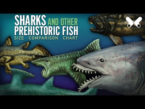 SHARKS And Other Prehistoric Fish (UPDATED). Size Comparison