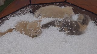Kittens enjoy playing in the house of snow.