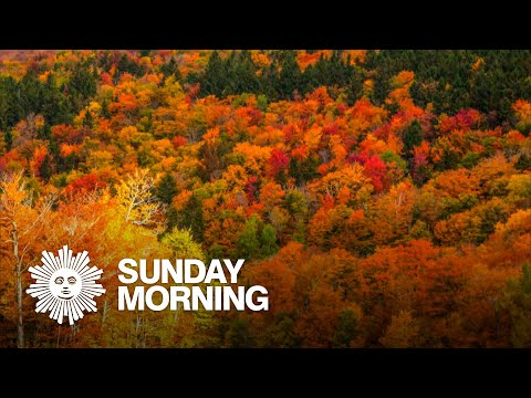 A colorful guide to New England's autumn leaves