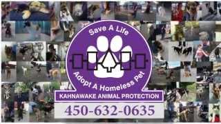 Kahnawake Animal Protection Donation Campaign