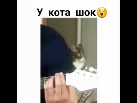 Когда кот оценил талант хозяйка