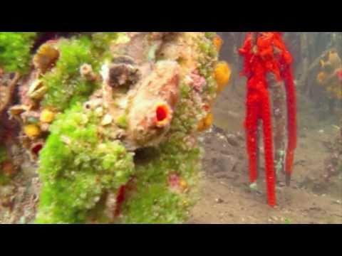 Panama Eco Adventure -  Episode 1