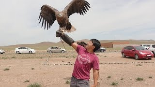 Touring Mongolia & I Held an EAGLE