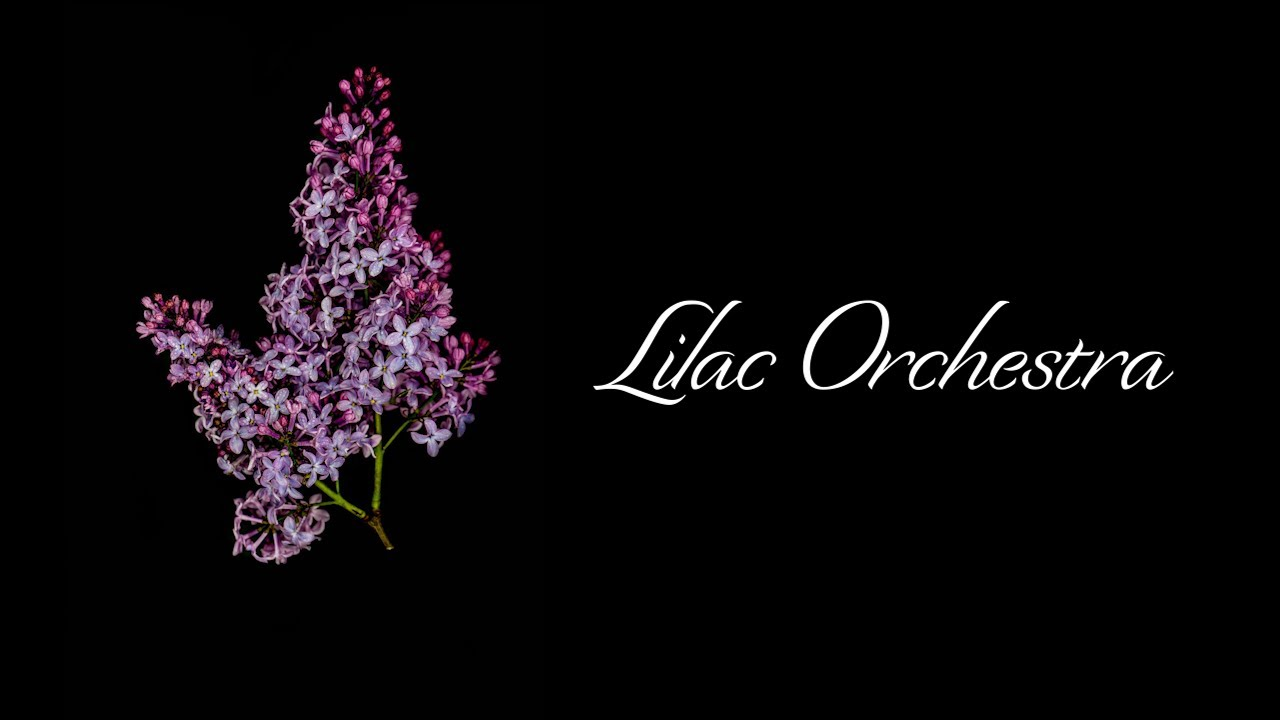 Lilac Orchestra (Lyric Video) - Lord Sycamore