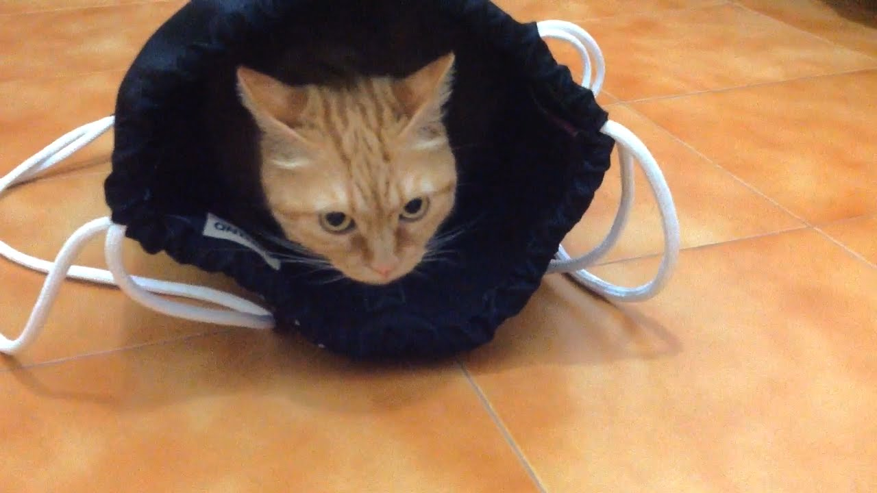 """How to Catch a Cat with an """" Alt Shape """" Bag for Woman SISSI THE"""