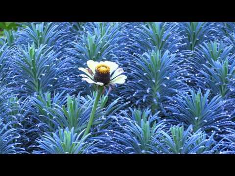 VanDusen Botanical Garden - Vancouver BC 20140927 1080p HD