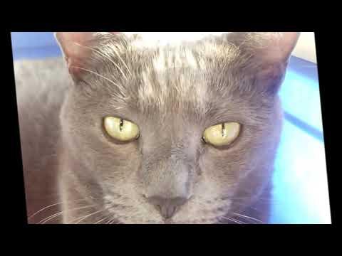 Beautiful Cats -Bellissimi Gatti