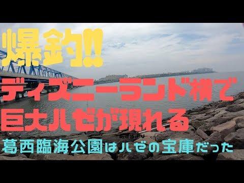 【葛西臨海公園】台風直後にハゼ釣りに行ったらバカでかいのが釣れた!!