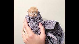 子猫ハンキー thumbnail