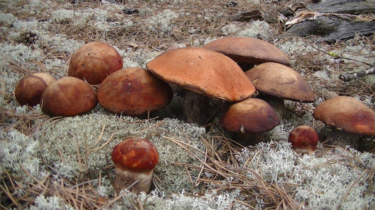 где очень много грибов