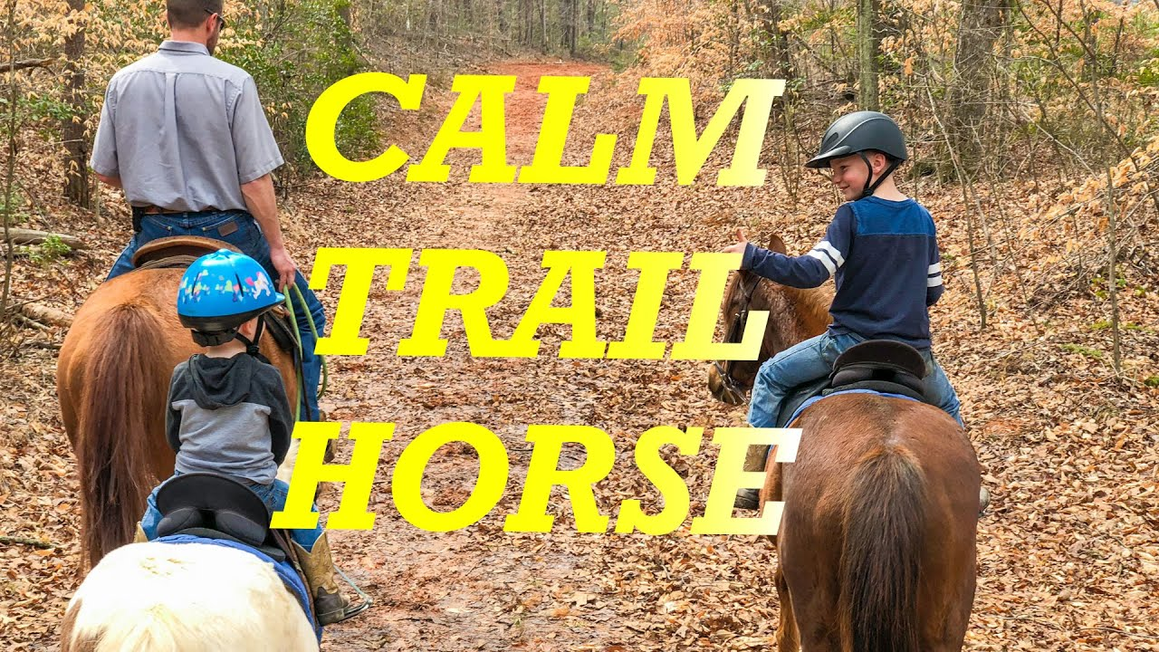 How To Calm Your Horse On The Trail In 2 Steps