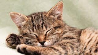 8 Hour Relaxing Music Sleep: Calming Music, Meditation Music, Soothing Music, Relaxation Music ☯2459