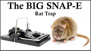 The BIG SNAP-E Rat Trap Feeds Huge Opossum With a Pouch Full Of Babies. Mousetrap Monday