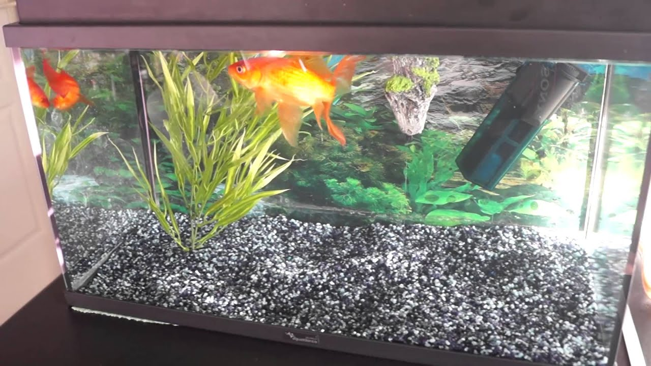 Pr sentation aquarium poisson rouge youtube for Aquarium 30l combien de poisson rouge