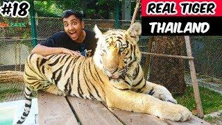 Real Tiger in Thailand | Tiger Park Pattaya 2019 | Tiger Attack | Tiger Fight | Ketan Singh Vlogs