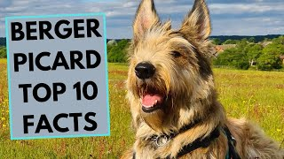 Berger Picard  TOP 10 Interesting Facts
