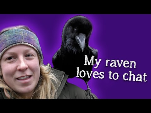 fable-the-raven-|-did-you-know-ravens-can-talk?!