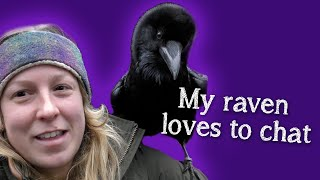 Fable the Raven |  Did you know Ravens can talk?!
