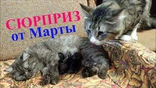 Новогодний сюрприз от кошки Марты
