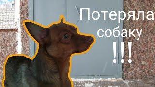 ПОТЕРЯЛА СОБАКУ!!! Собака убежала от меня!!! Приключения с собакой!