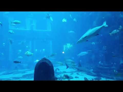 LS! The Lost Chambers Aquarium Dubai (1)
