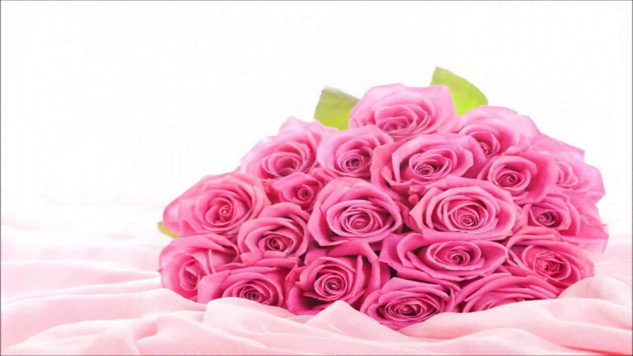 Special Pink Rose Hd Wallpaper Images Youtube