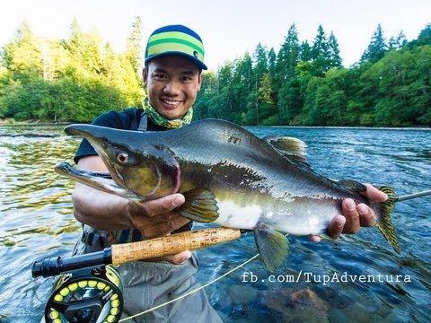Pink Salmon Fly Fishing ตกปลาแซลมอน