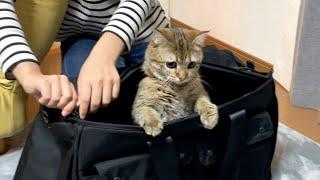 猫が健康診断を嫌がりすぎて朝から大変でした!