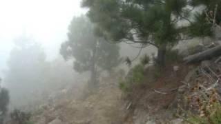 Decenso crater- bosque volcan tacana 09