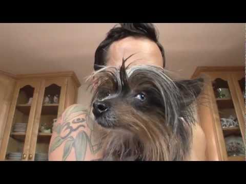 Vegan Dog Food and Pet Nutrition: J-Wro Lo-Lo Vegan Vlog