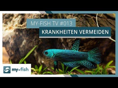 So vermeidest du Fischkrankheiten in deinem Aquarium | my-fish TV