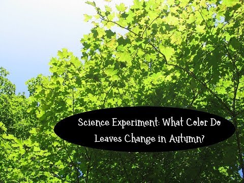 What Colors are Hidden in Leaves? An Experiment