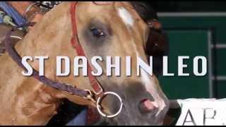 ST Dashin Leo
