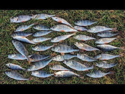 Рыбалка на окуня онлайн