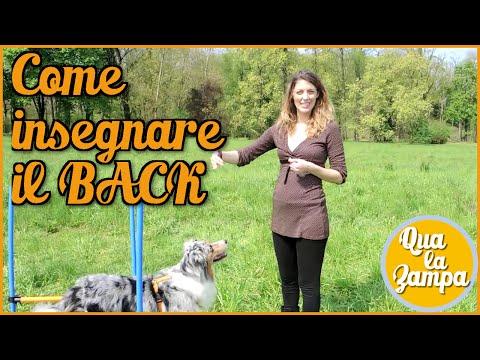 Come insegnare il BACK - Addestramento Educazione cani n° 18   Qua la Zampa