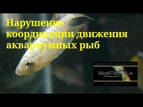 Вопрос: Почему рыба плавает?