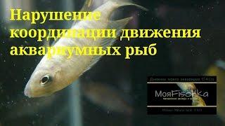 Нарушение координации движения у аквариумных рыб. Малавийские цихлиды