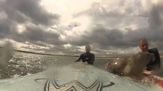 偶然出会ったサーファーとアザラシ、仲良く波乗りを楽しむの巻