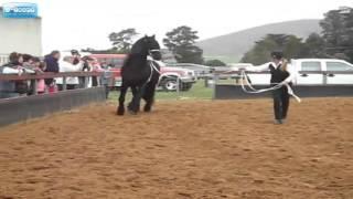 أكبر حصان   في العالم.-ULA MIAH  -ROHINGYA