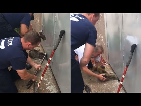 Watch Terrifying Moment Firefighters Save Cat With Head Stuck Under Door