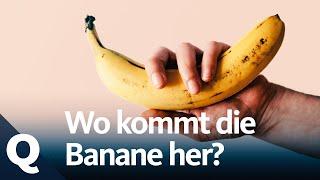 Die Geschichte der Bananen | Quarks