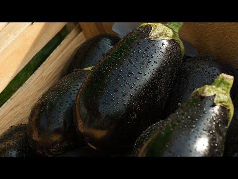 Сорт винограда Изабелла фото, отзывы, описание